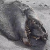 An alleged 'sea monster' whose carcass washed up on a New Zealand beach has been identified ... but video footage of it still remains monstrous.