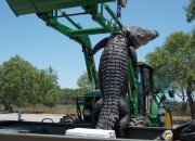 A record-breaking monster gator was caught in Texas by a teenager who was on his first hunt. Here's how it happened.