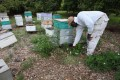 Honeybees Endangered As Colony Collapse Disorders Worsens