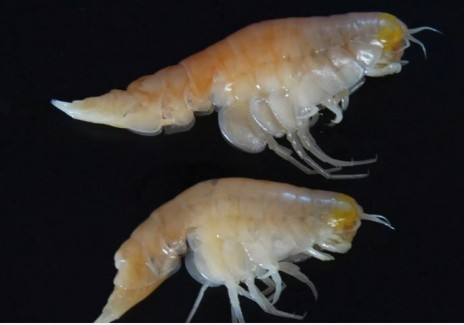Toxic Chemicals Affect Marine Life In Deep Sea Trenches