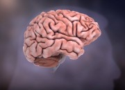 Cholesterol can have effects even in the brain. Brain protein regulation is aided by cholesterol, as a study shows.
