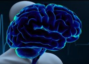 The brain is more complex than most people think. A new study says that more brain activity has been seen than previously thought.